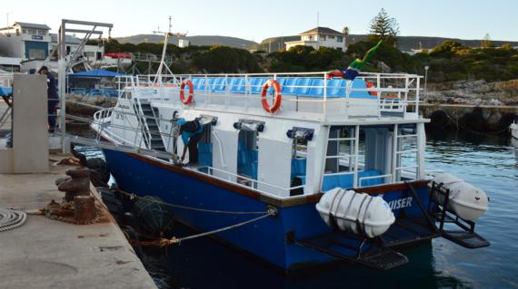 Hermanus Whale Cruises