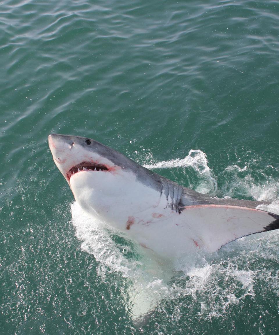 SharkLady Adventures