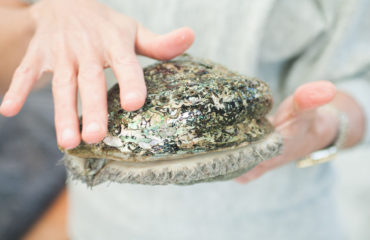 Heart of Abalone