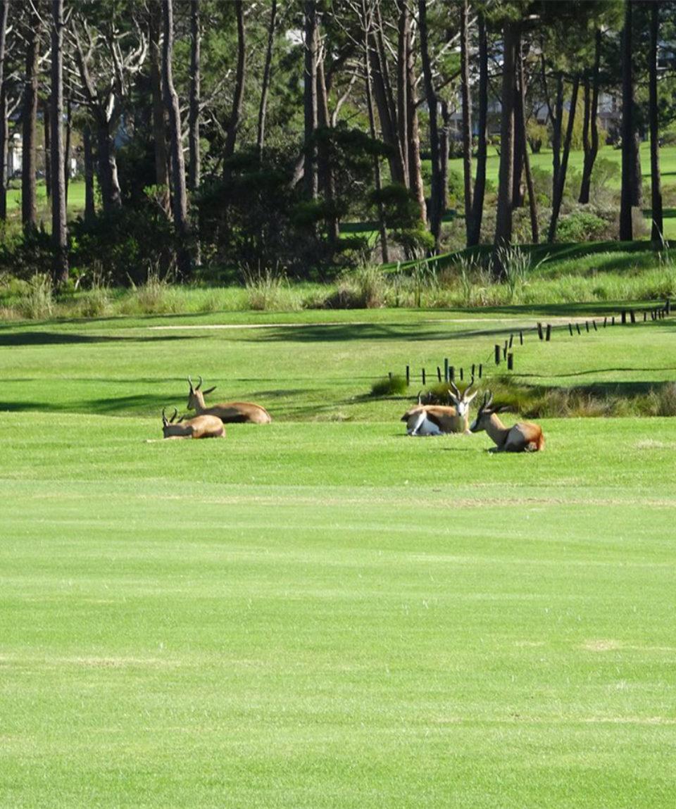 Hermanus Golf Club